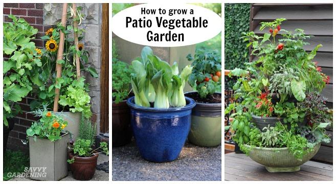 How to grow a patio vegetable garden