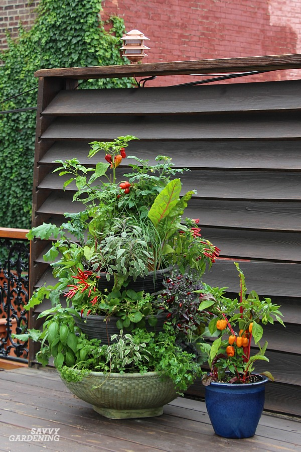 A food fountain makes a great patio food garden for small-space areas.