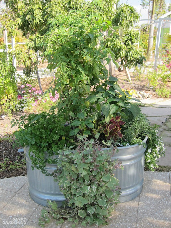 Use galvanized stock tanks to grow food on patios and porches.
