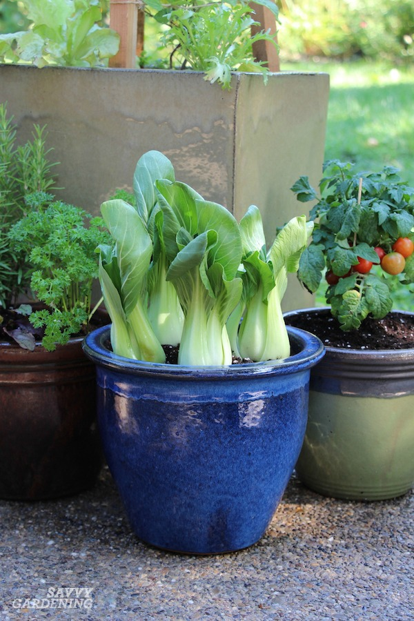 The best vegetables for a patio food garden.