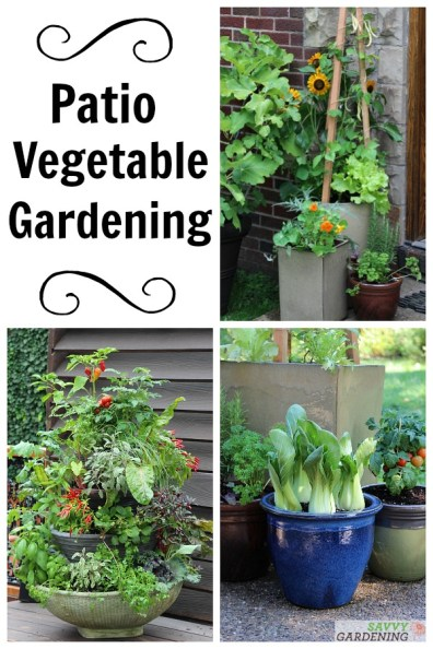 Plant and Grow a Patio Vegetable Garden. Learn how to plant, tend, and harvest a patio vegetable garden to grow fresh, homegrown vegetables in a small amount of space.