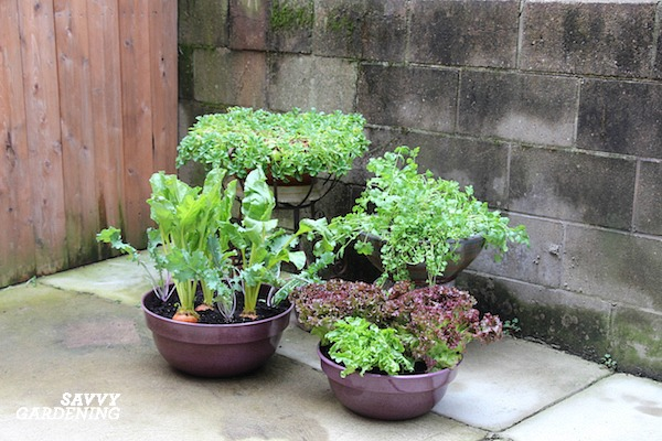 How to plant a small container food garden