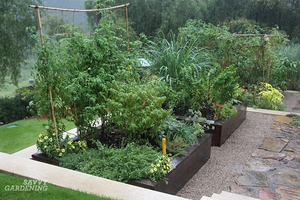 How to set up a backyard vegetable garden