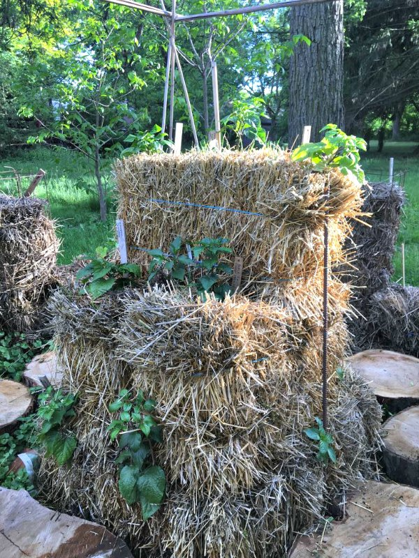 a straw bale pepper pyramid