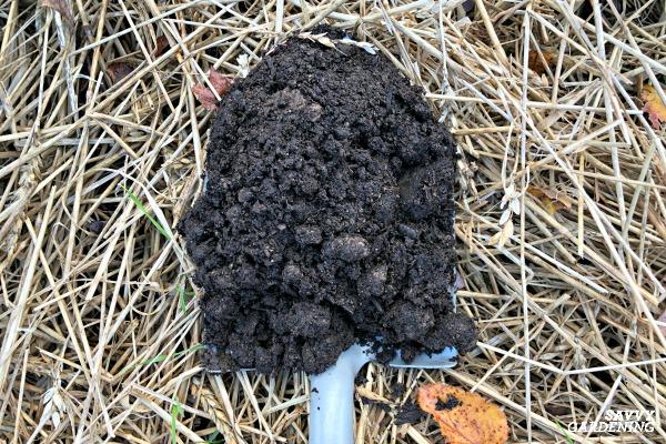 Compost is an excellent garden soil amendment