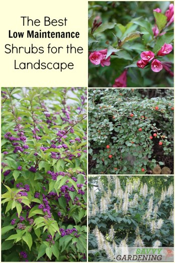 18 of the best low maintenance shrubs for the garden