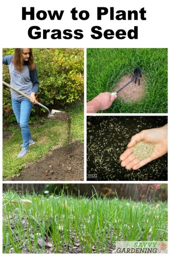 Learning how to plant grass seed is essential for every homeowner. Get tips on sowing new grass seed in bare patches or over large areas.
