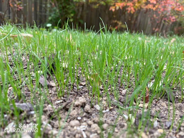 The low-down on planting grass seed