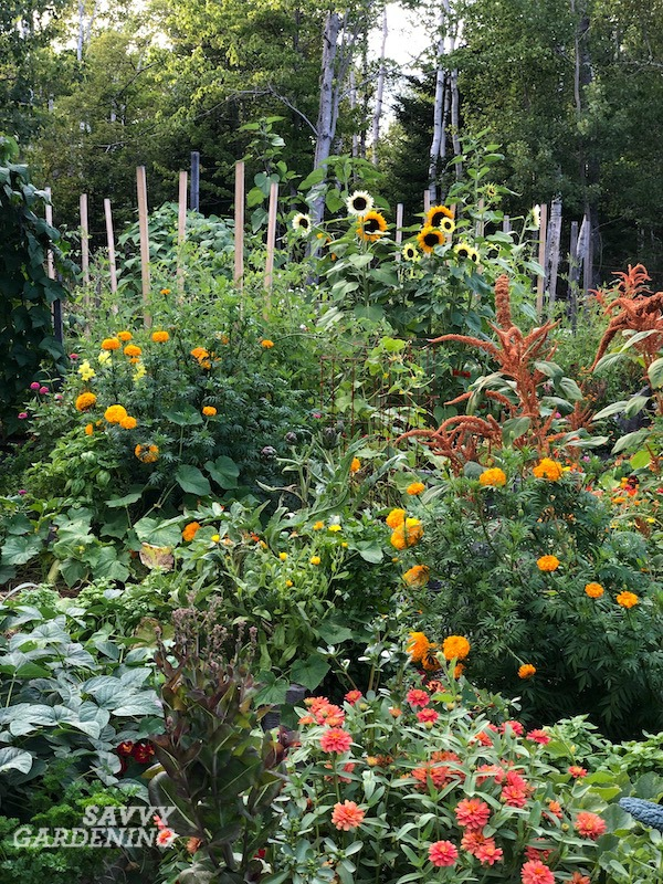 Science-based Companion Planting Tips for the Garden
