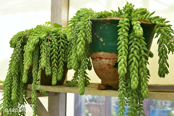 Houseplants for poorly lit rooms