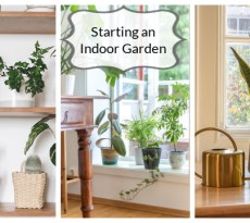When starting an indoor garden consider light, humidity, and water.