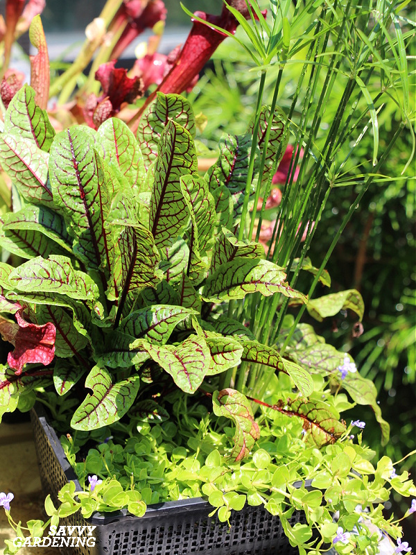 A container garden with edible and ornamental plants