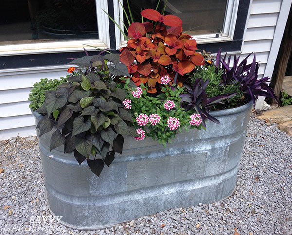 galvanized raised bed featuring annuals