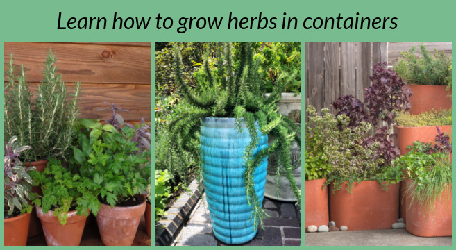 Learn how to grow herbs in containers