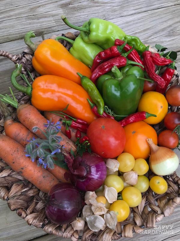 Choosing the best fertilizer for an organic garden.