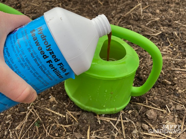 How to use liquid plant food in the garden.