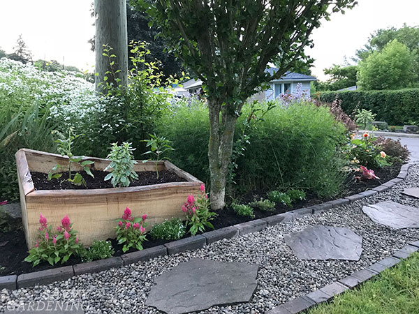 live edge raised bed in a front yard garden