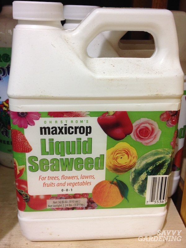 Seaweed-based fertilizers are excellent natural fertilizer choices.