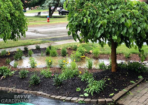 A rain garden after a storm