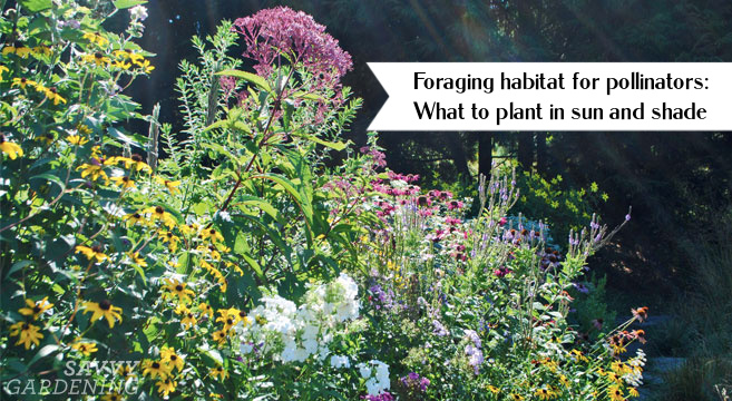 Foraging habitat for pollinators: What to plant in sun and shade