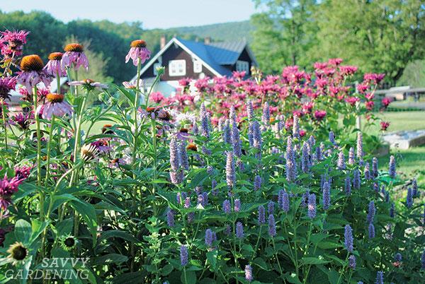 provide foraging habitat for pollinators in a sunny garden