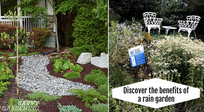 rain garden benefits and tips