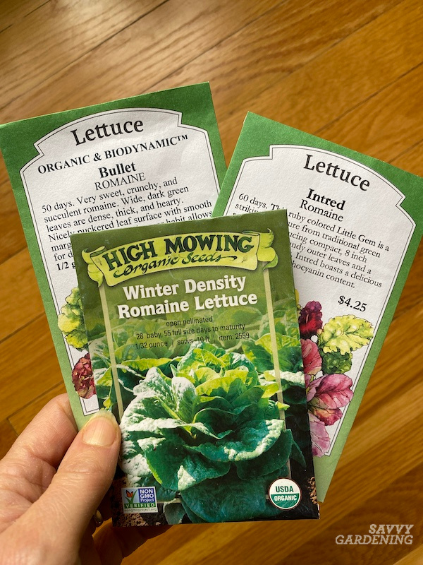 How to grow a fall crop of romaine lettuce