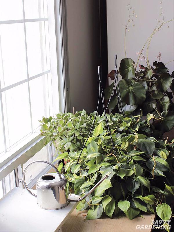 understanding light for house plants