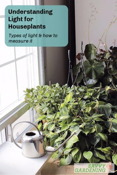 Understanding light for houseplants