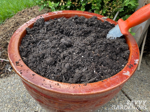 The best soil for growing watermelon in containers