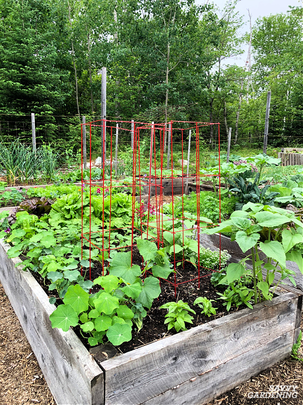cucumbers are one of the best vegetables to grow in raised beds