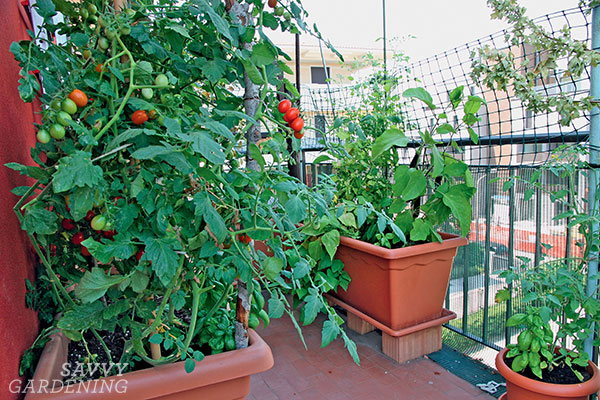 Veggie containers on a balcony