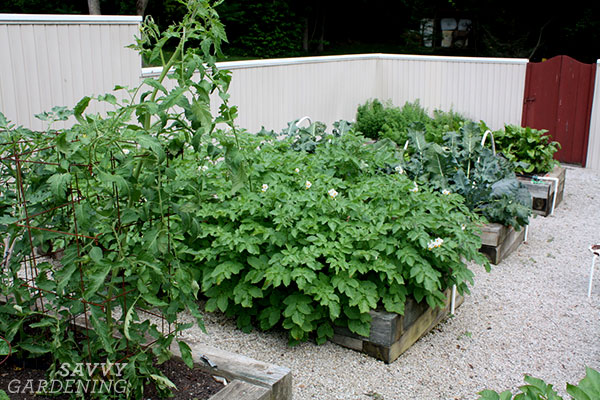 gated raised bed gardens