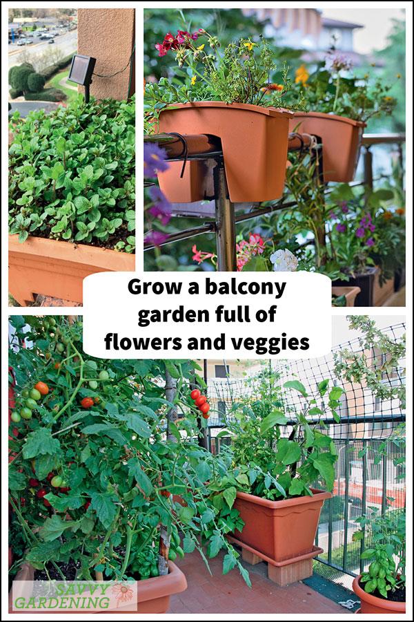 growing a balcony garden