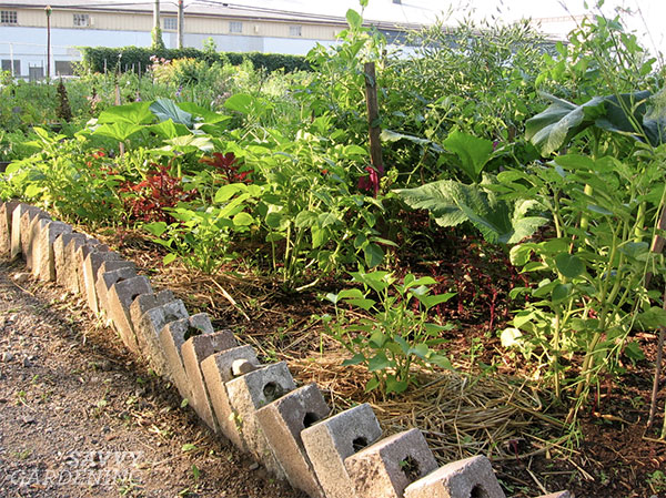 A shallow raised bed made from bricks