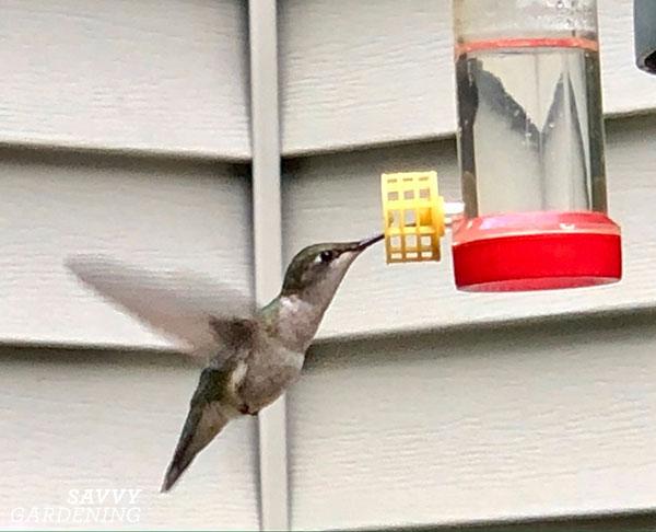 a hummingbird at a feeder
