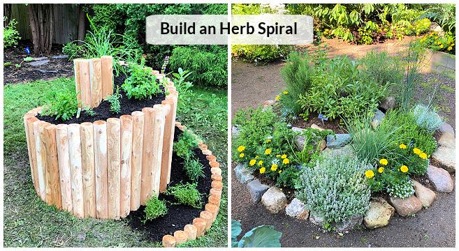 An herb spiral garden