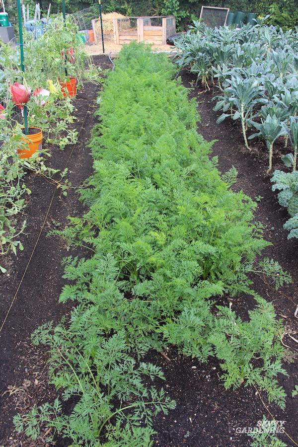 Root crop harvesting tips