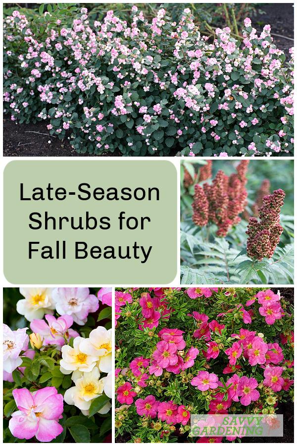 late season shrubs for fall beauty