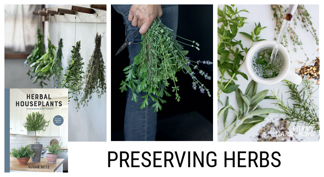 Tips for using homegrown herbs