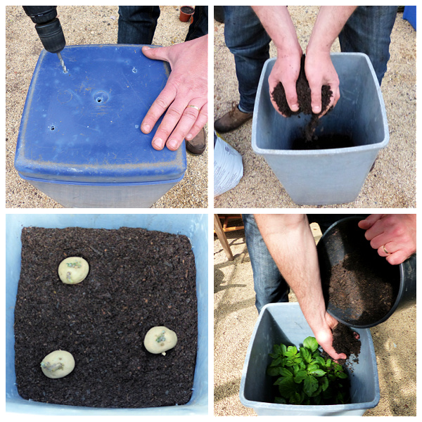 growing potatoes in a trash can