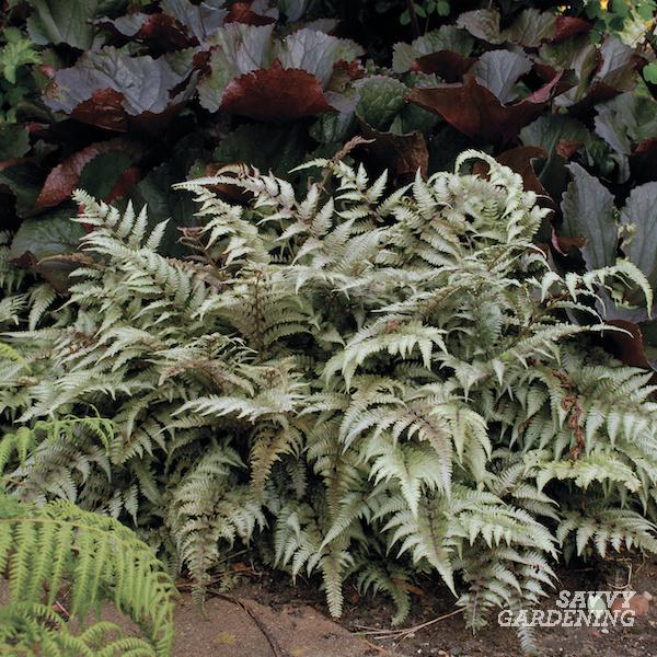 Plants for moist shade