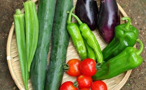 夏バテには夏野菜が効果あり!トマトやオクラが効く理由と栄養素がすごい!