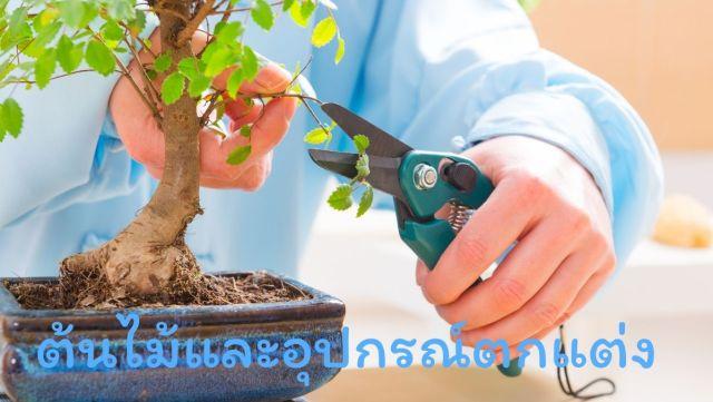 ต้นไม้ อุปกรณ์ ขายของออนไลน์ อาชีพอิสระ สร้างรายได้ สวัสดี sawadd sawasdee