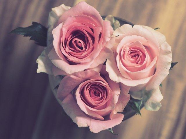 ดอกกุหลาบ สุขสันต์วันเกิด sawadd