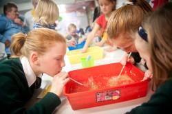 South Australian Whale Centre education programs 'Grubs Up'