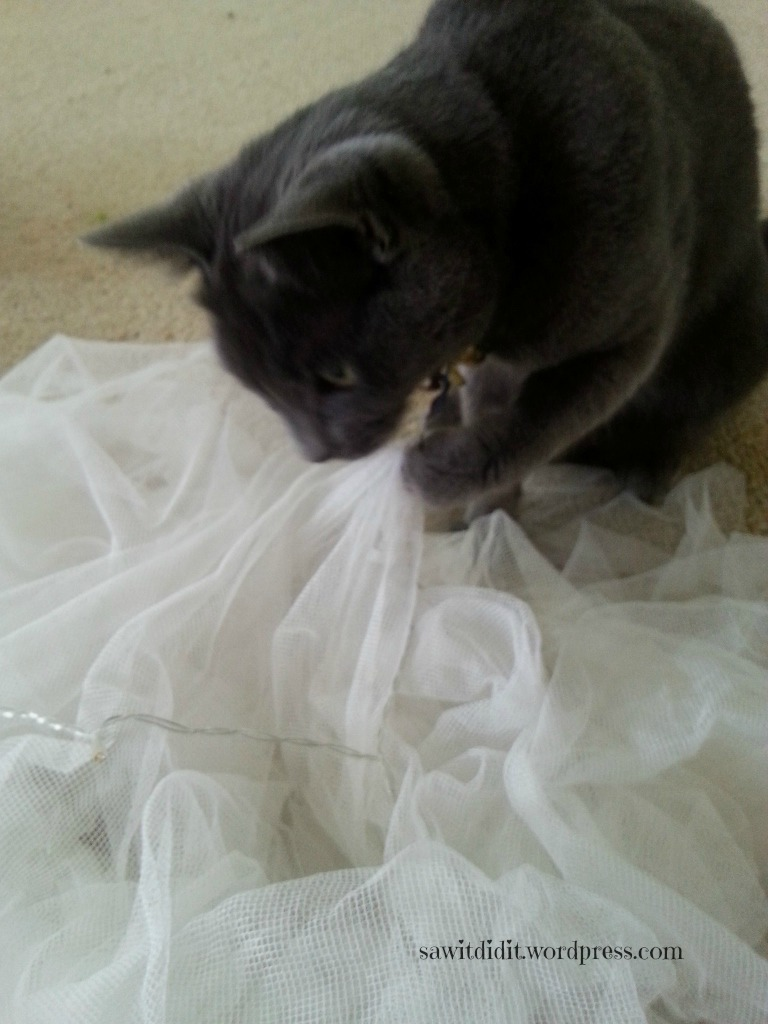Helpful kitty 1