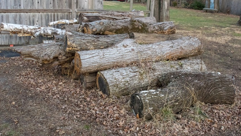 Logs to be Cut for Firewood