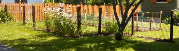 1 backyard before fence sos