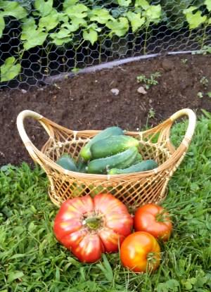 harvest 8.4